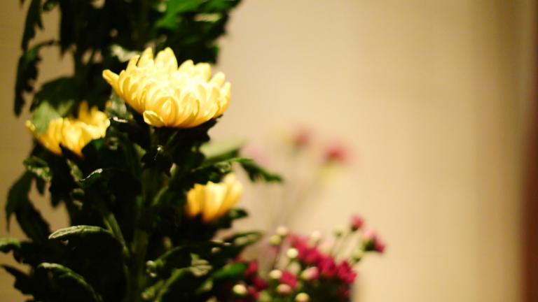 季節の花々がホールを彩る